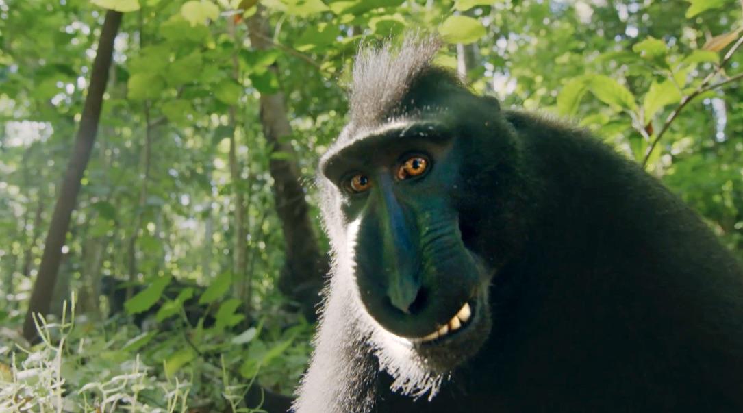 AP Monkeys – An amazing Family Promo